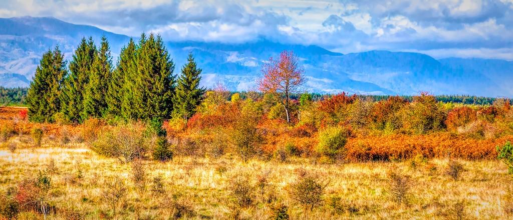 克罗地亚旅途,那一片树林_图1-5