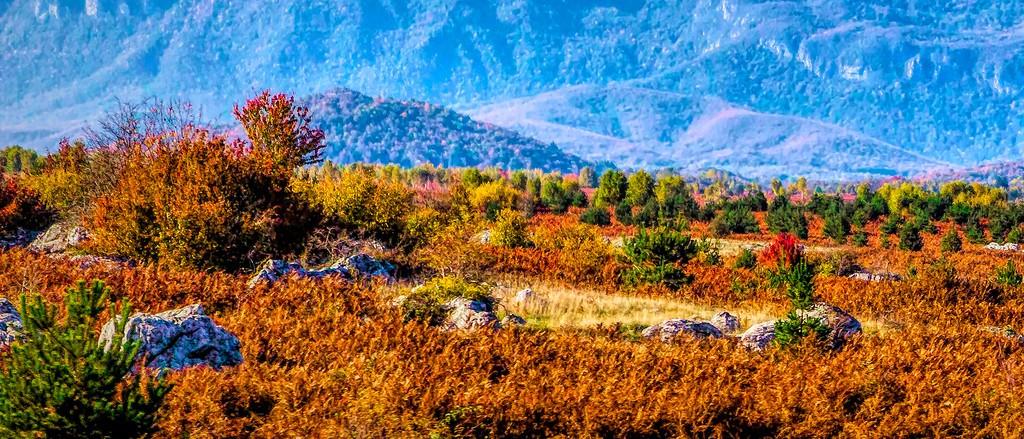 克罗地亚旅途,那一片树林_图1-1