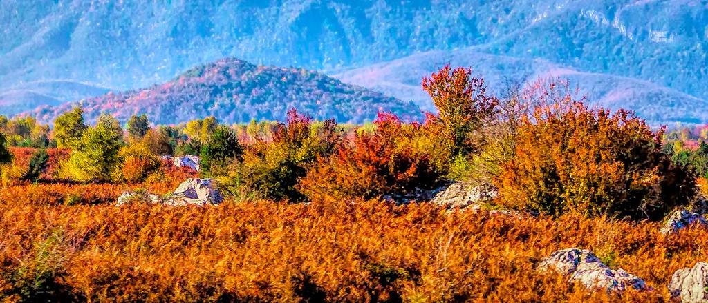 克罗地亚旅途,那一片树林_图1-18