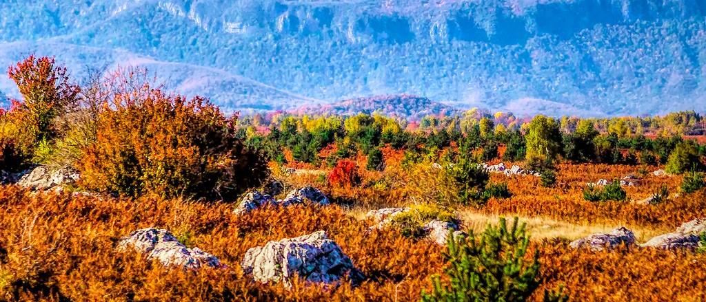 克罗地亚旅途,那一片树林_图1-23