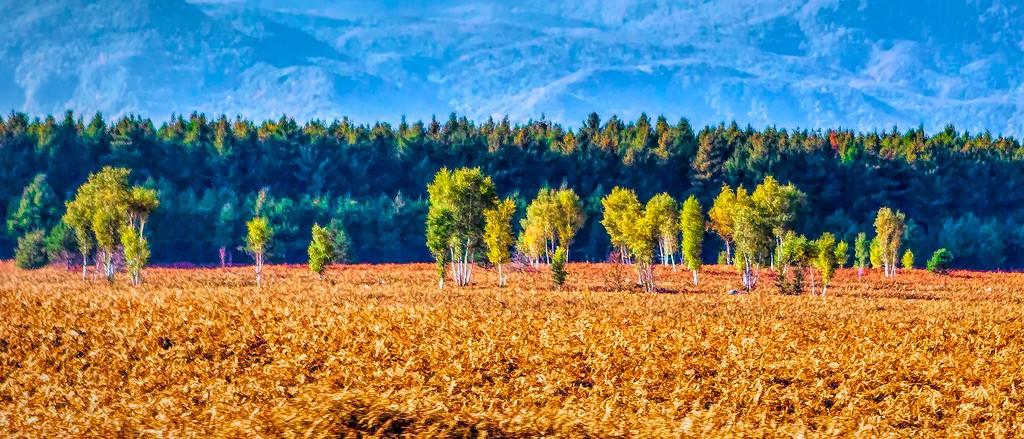 克罗地亚旅途,那一片树林_图1-26