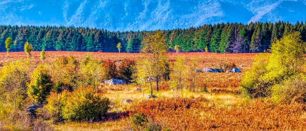 克罗地亚旅途,那一片树林_图1-36