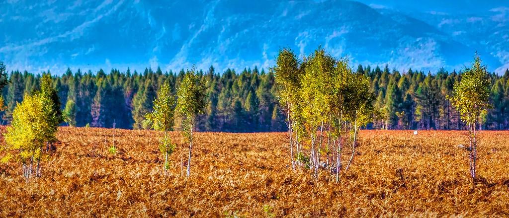 克罗地亚旅途,那一片树林_图1-40