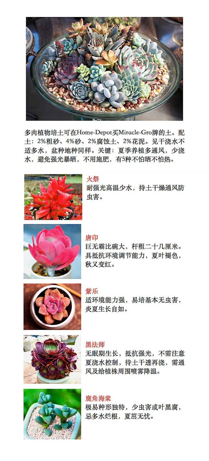 【晓鸣诗歌】五绝.玉蝶石莲花_图1-2