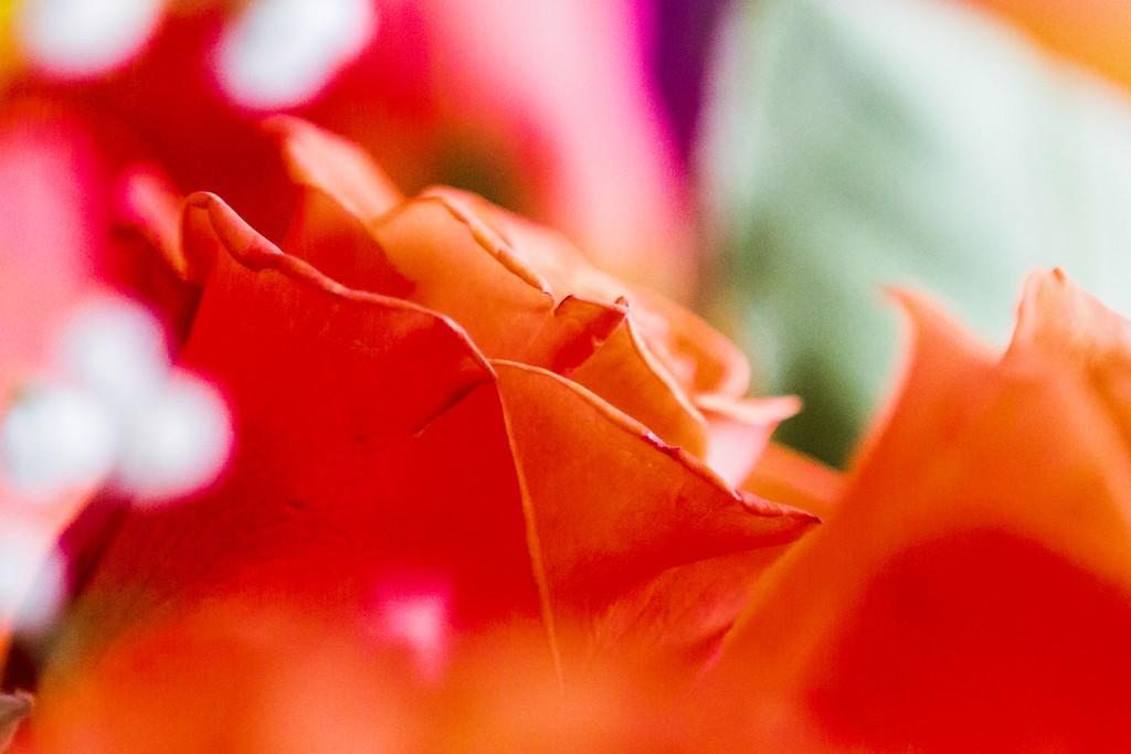 玫瑰花,展开局部_图1-17