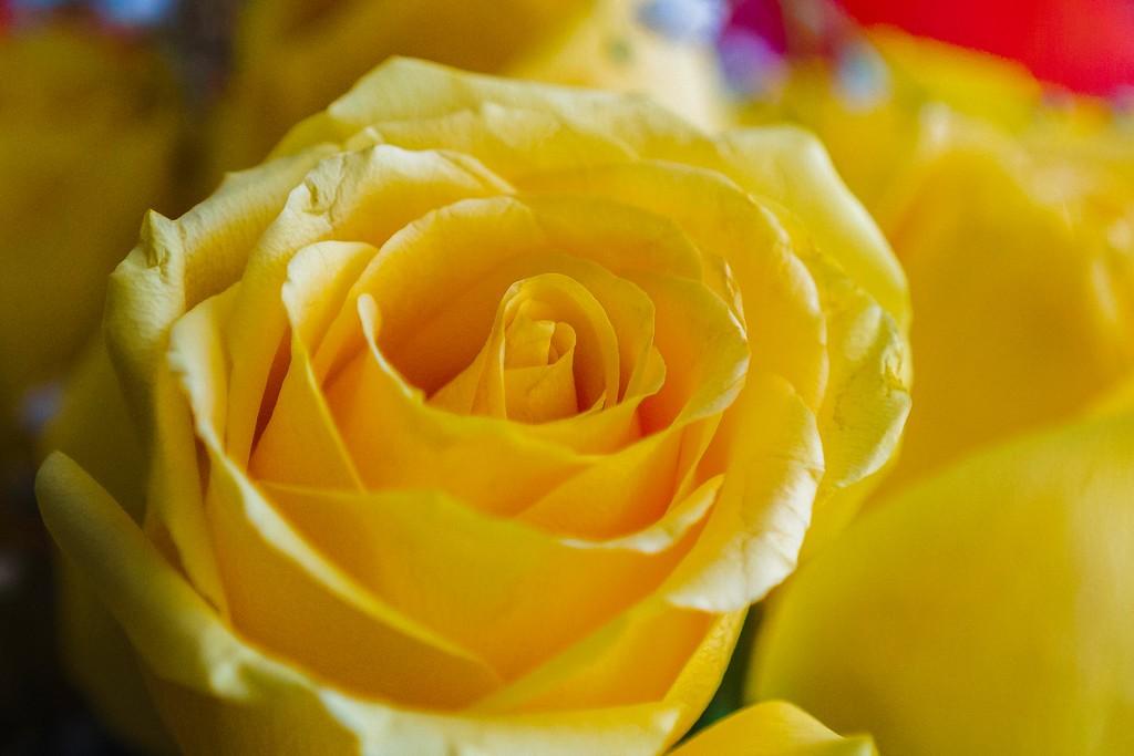 玫瑰花,展开局部_图1-19