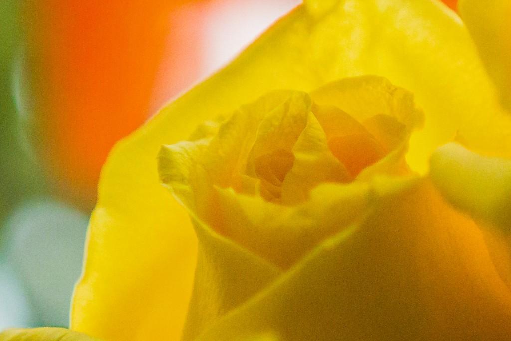 玫瑰花,展开局部_图1-7