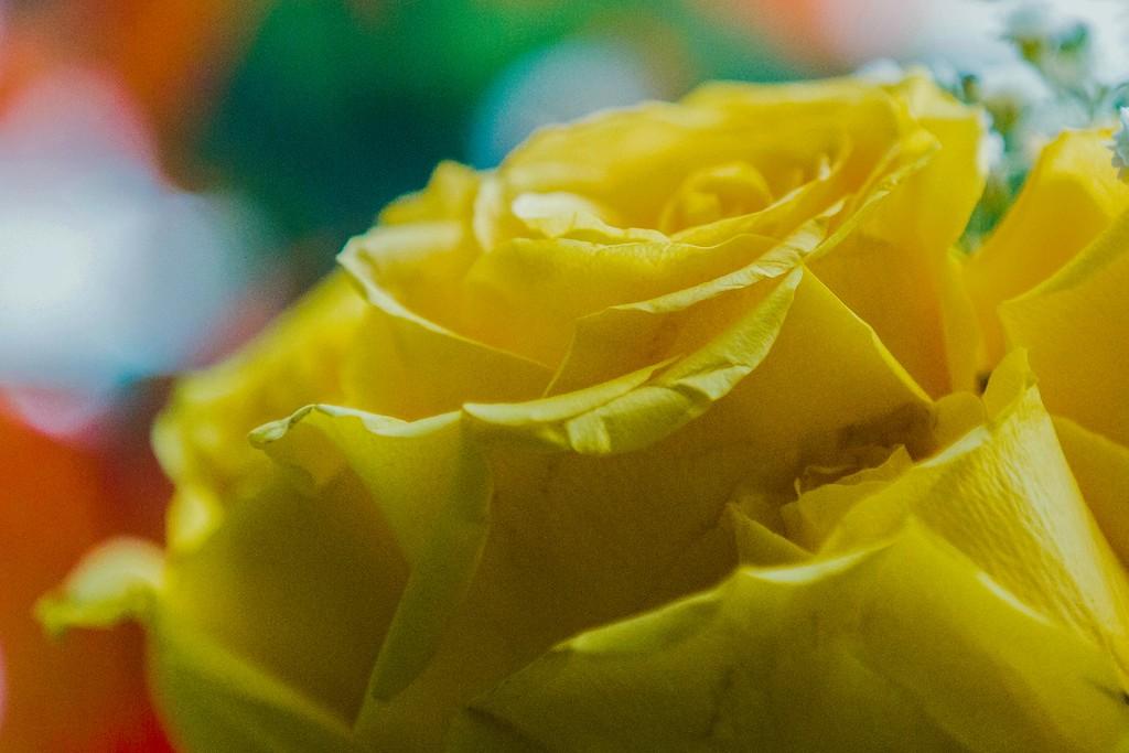 玫瑰花,展开局部_图1-2