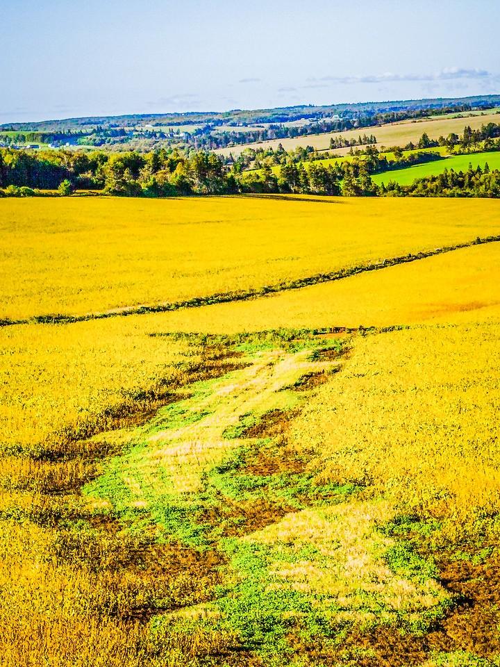 加拿大路途,村里的发现_图1-21