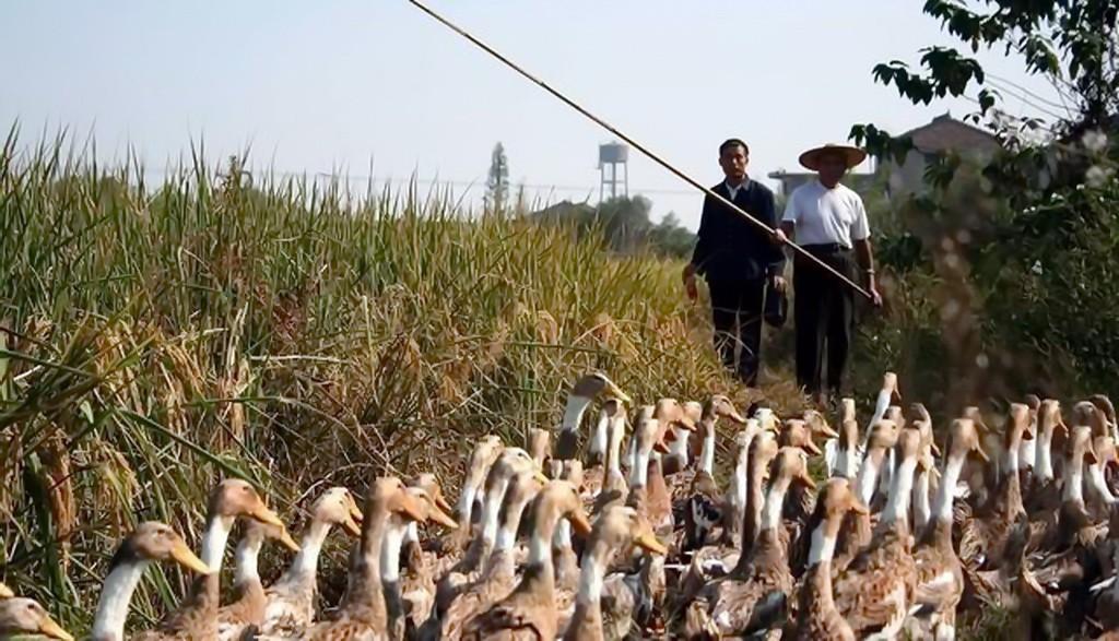 杭州女子失踪被碎尸案源自一场错误的邂逅_图1-3