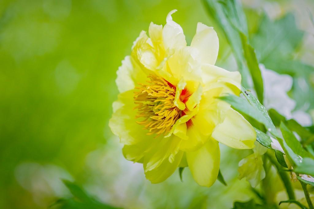牡丹花,圆满j吉祥_图1-13