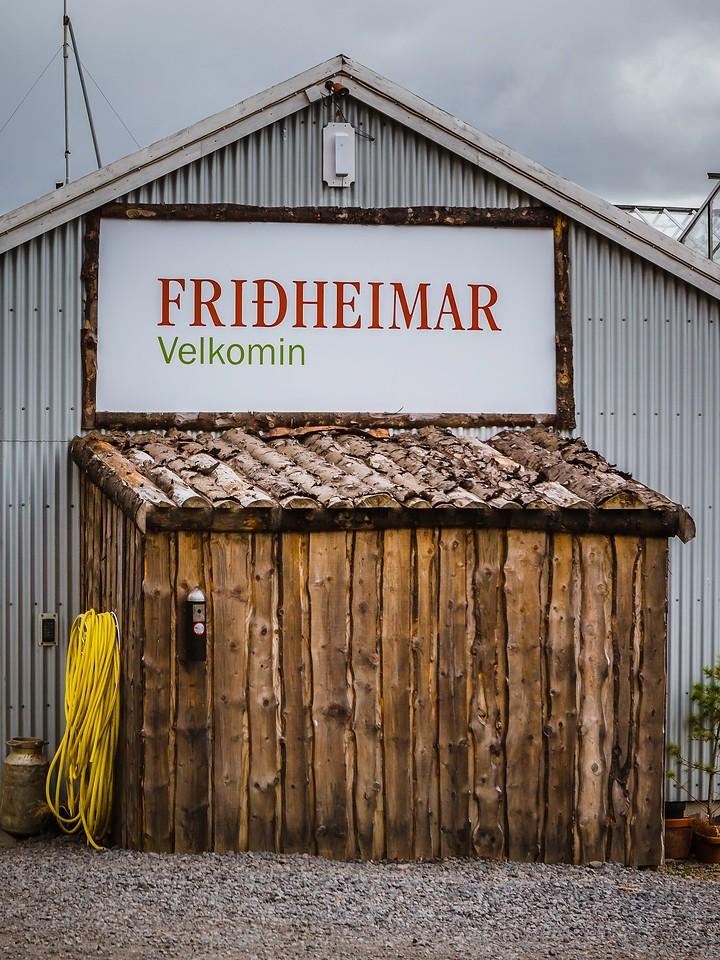 冰岛弗里德海默番茄农场(Frioheimar tomato farm),看马术尝番茄_图1-23