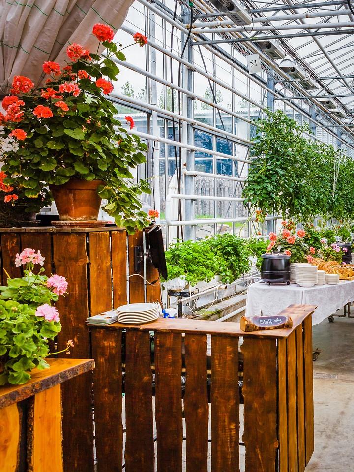 冰岛弗里德海默番茄农场(Frioheimar tomato farm),看马术尝番茄_图1-18