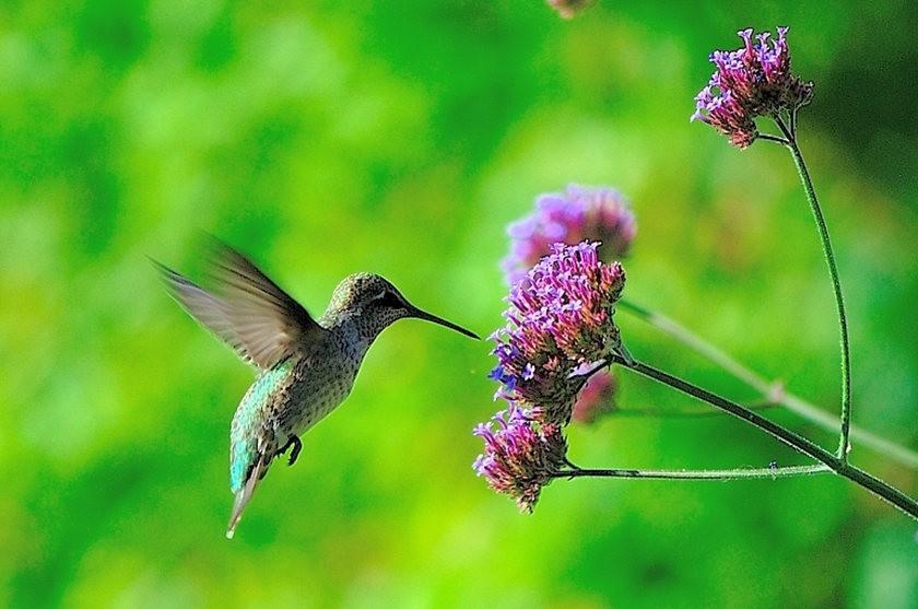 蜂鸟与蜜蜂_图1-4