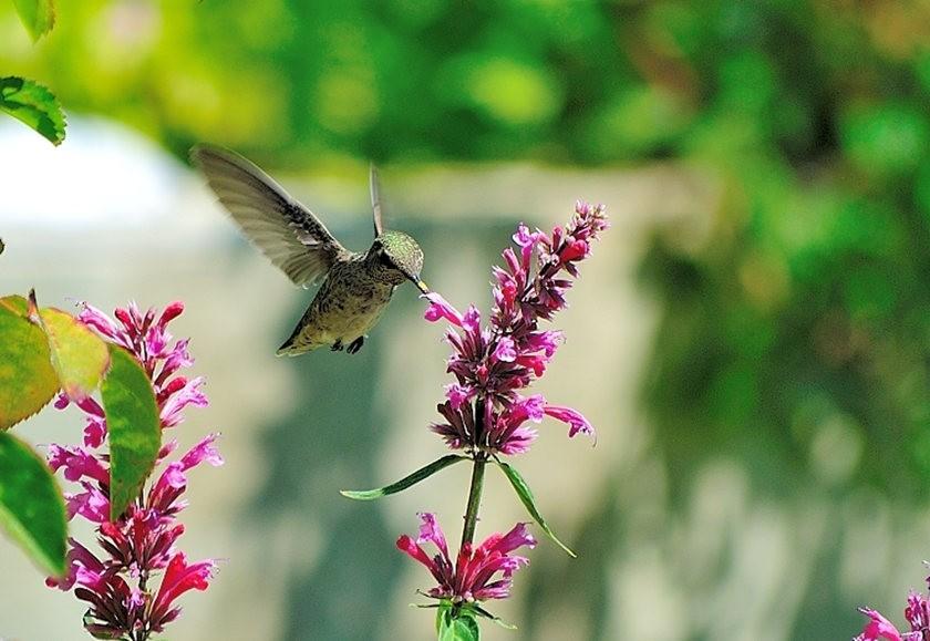 蜂鸟与蜜蜂_图1-6