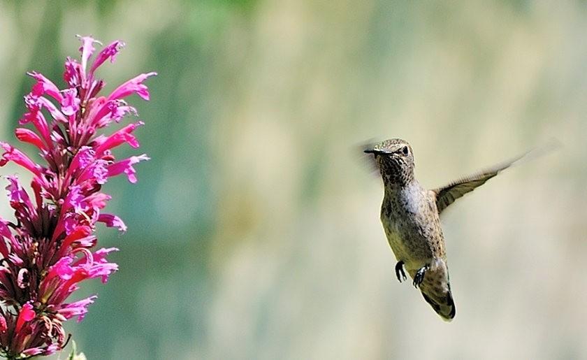 蜂鸟与蜜蜂_图1-8