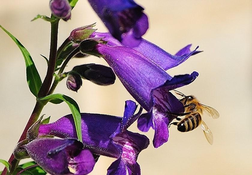 蜂鸟与蜜蜂_图1-12