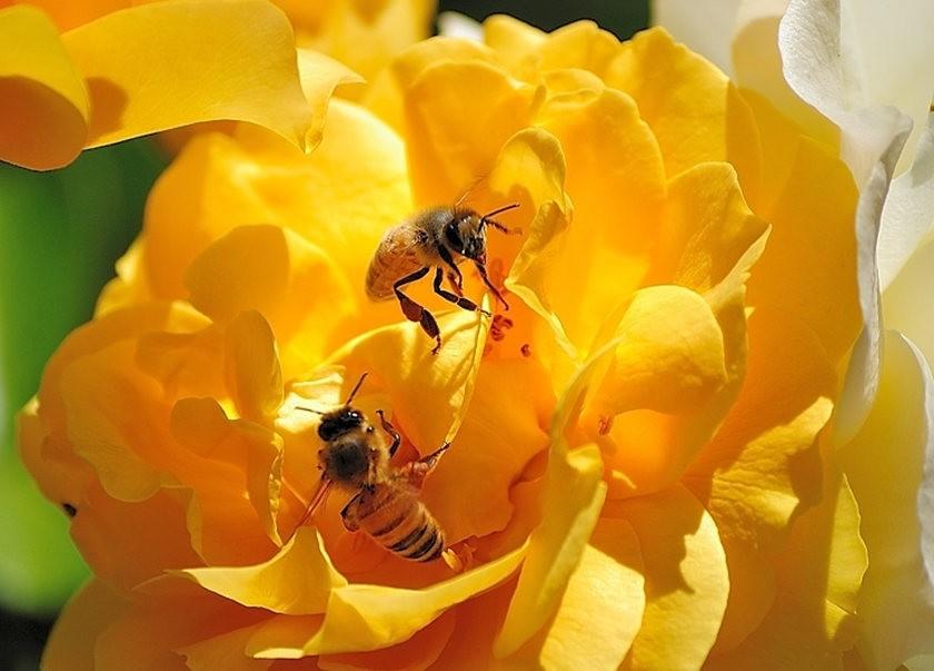 蜂鸟与蜜蜂_图1-13