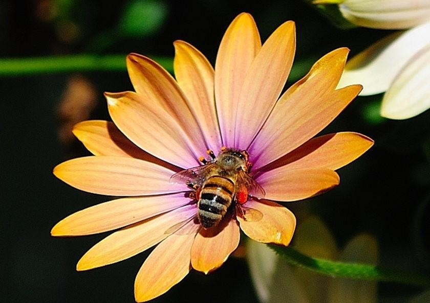 蜂鸟与蜜蜂_图1-15