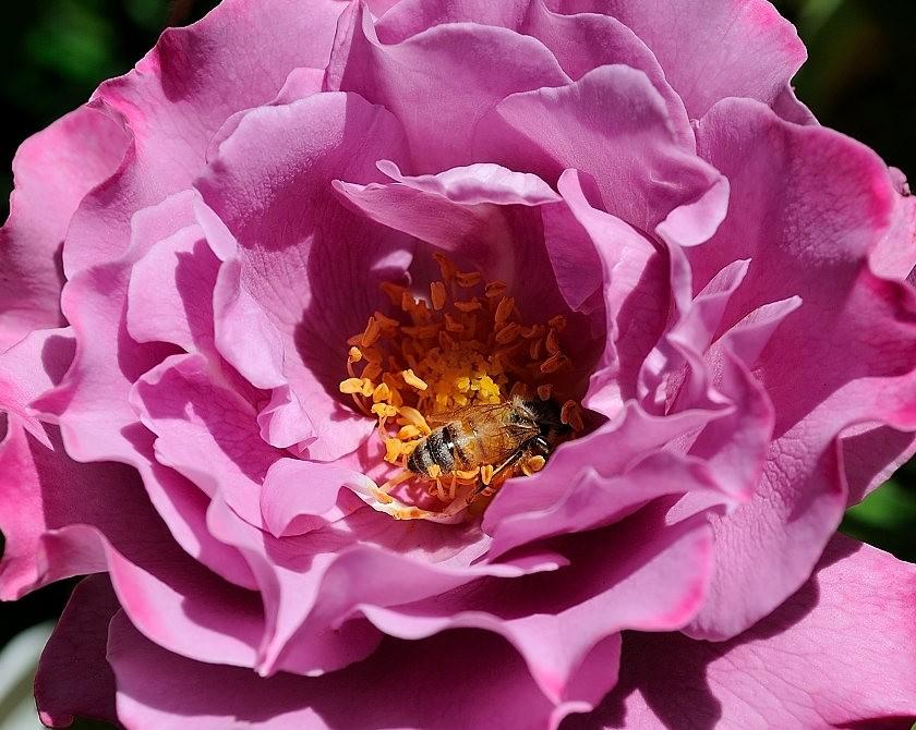 蜂鸟与蜜蜂_图1-16