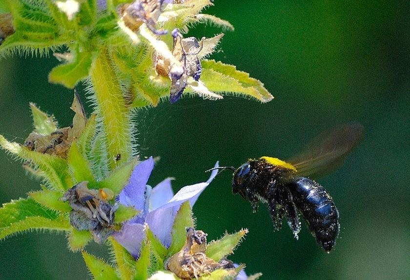 蜂鸟与蜜蜂_图1-17