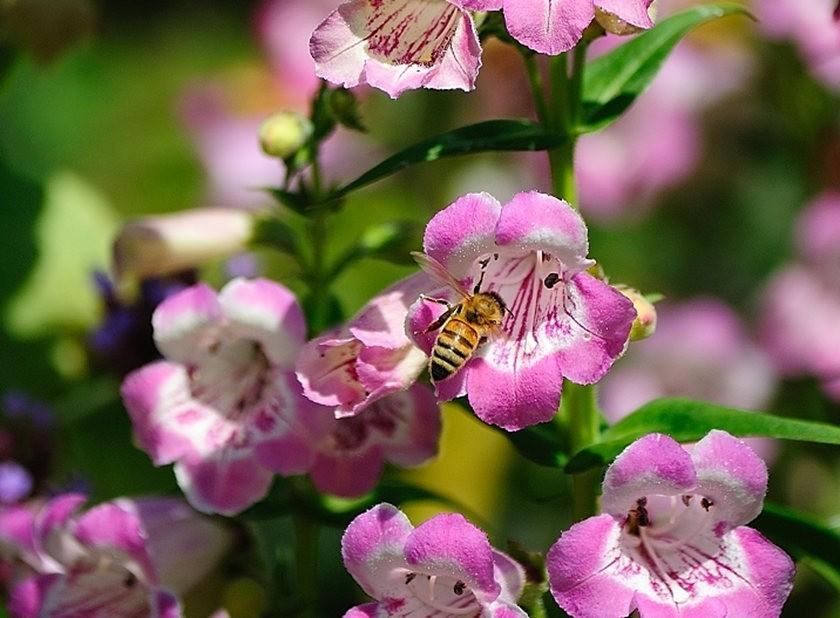 蜂鸟与蜜蜂_图1-18