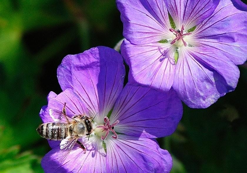 蜂鸟与蜜蜂_图1-19