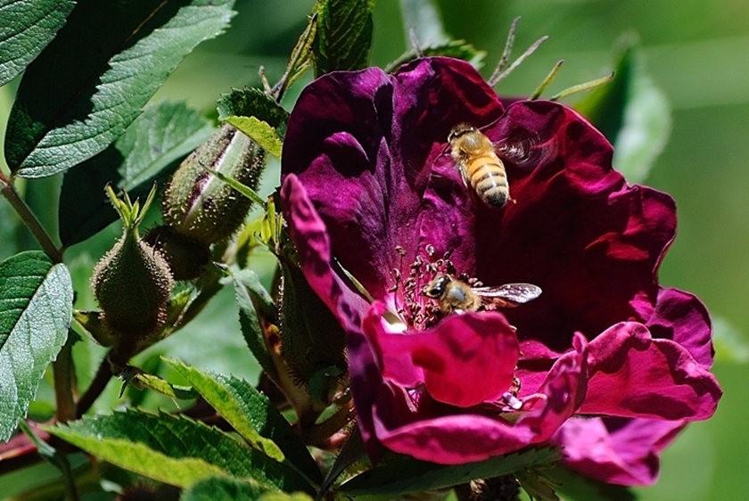 蜂鸟与蜜蜂_图1-20
