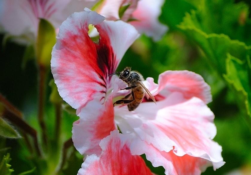 蜂鸟与蜜蜂_图1-21