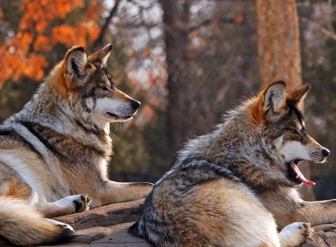 人情薄如纸,人心狠如狼的情况是在什么时候出现这样的结局 ..._图1-1