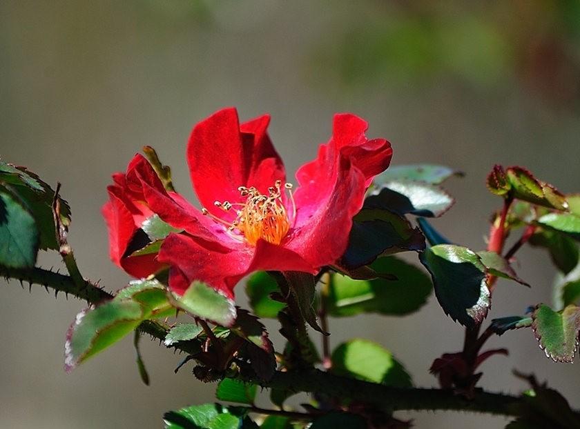 仲夏玫瑰---2_图1-9