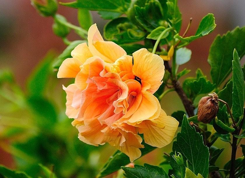 仲夏玫瑰---2_图1-11