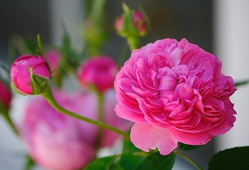 仲夏玫瑰---2_图1-16