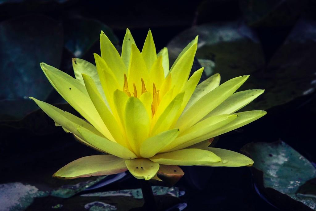莲花,真诚和善_图1-17