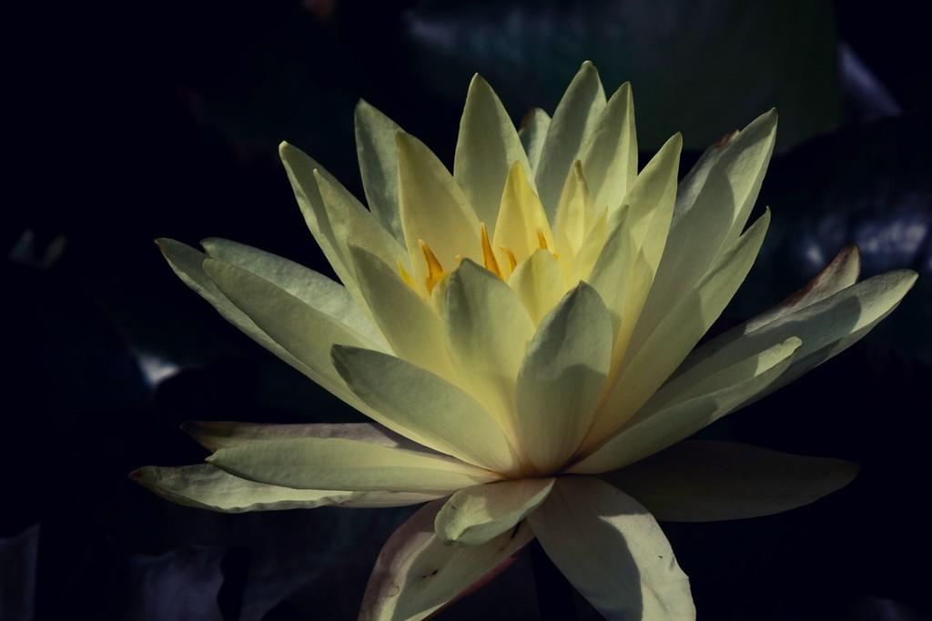 莲花,真诚和善_图1-3