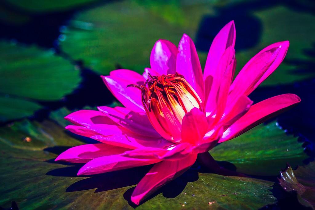 莲花,真诚和善_图1-8