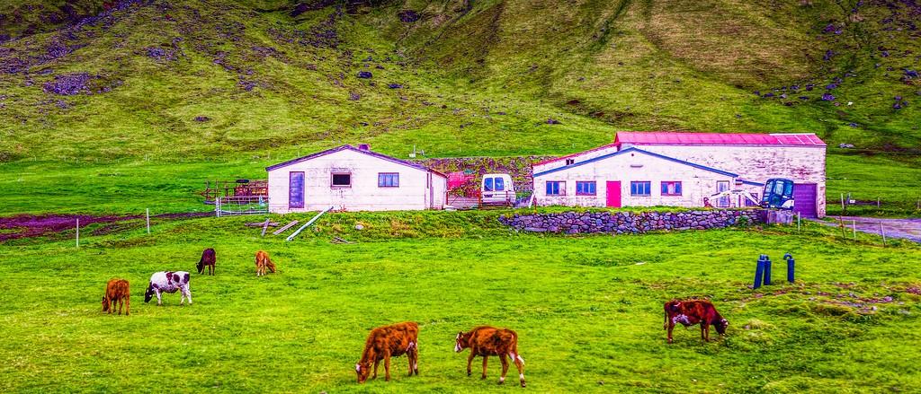 冰岛风采,温馨体验_图1-21