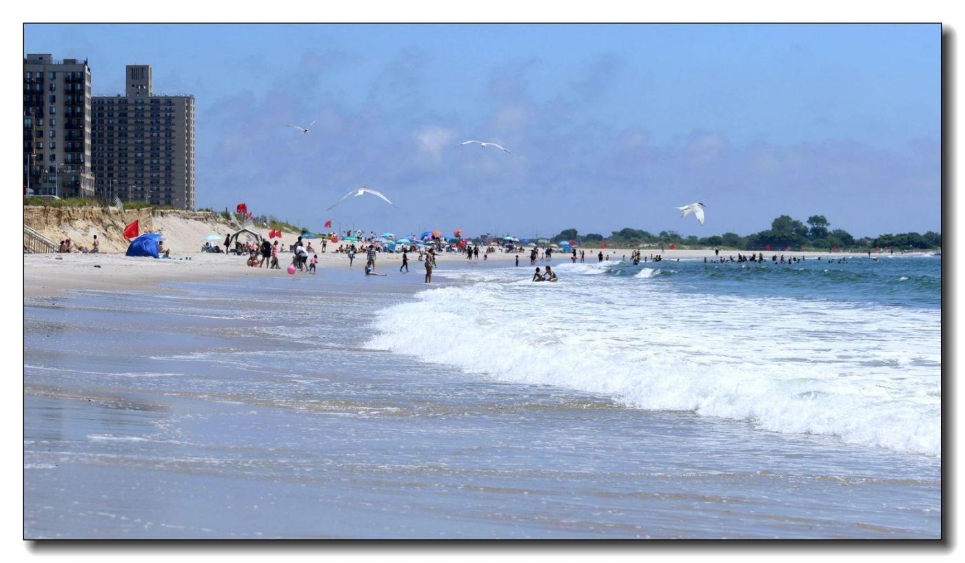 洛克威海滩拍鸟-燕鸥_图1-11