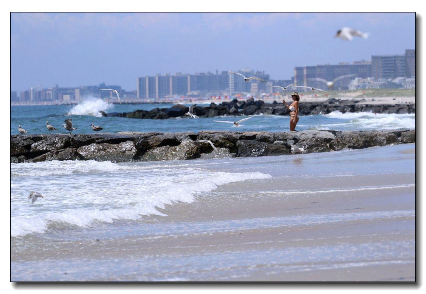 洛克威海滩拍鸟-燕鸥_图1-12