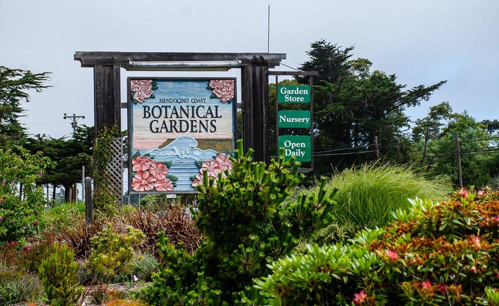 门多西诺海岸植物园重新开放_图1-1