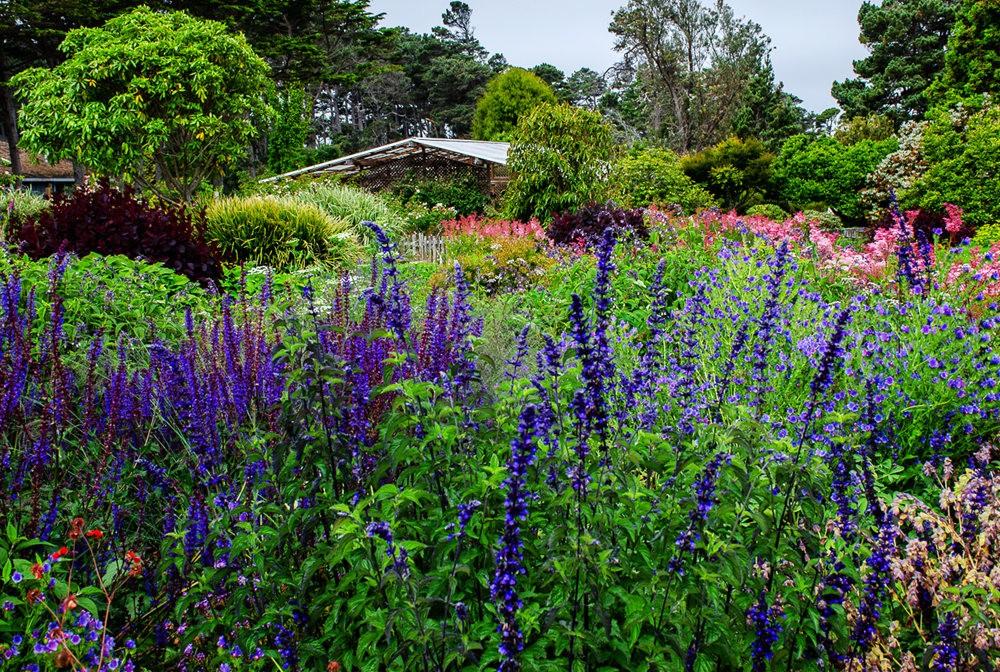 门多西诺海岸植物园重新开放_图1-5