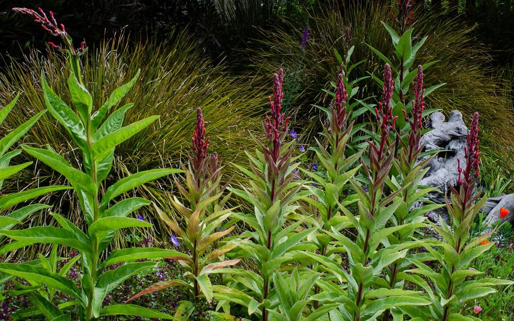 门多西诺海岸植物园重新开放_图1-6