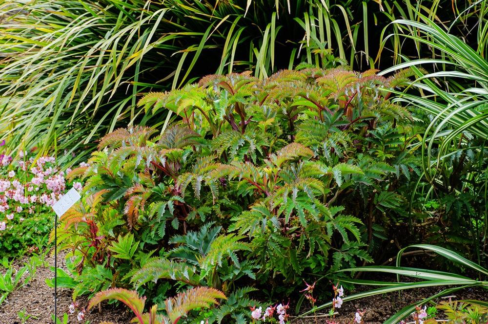 门多西诺海岸植物园重新开放_图1-8