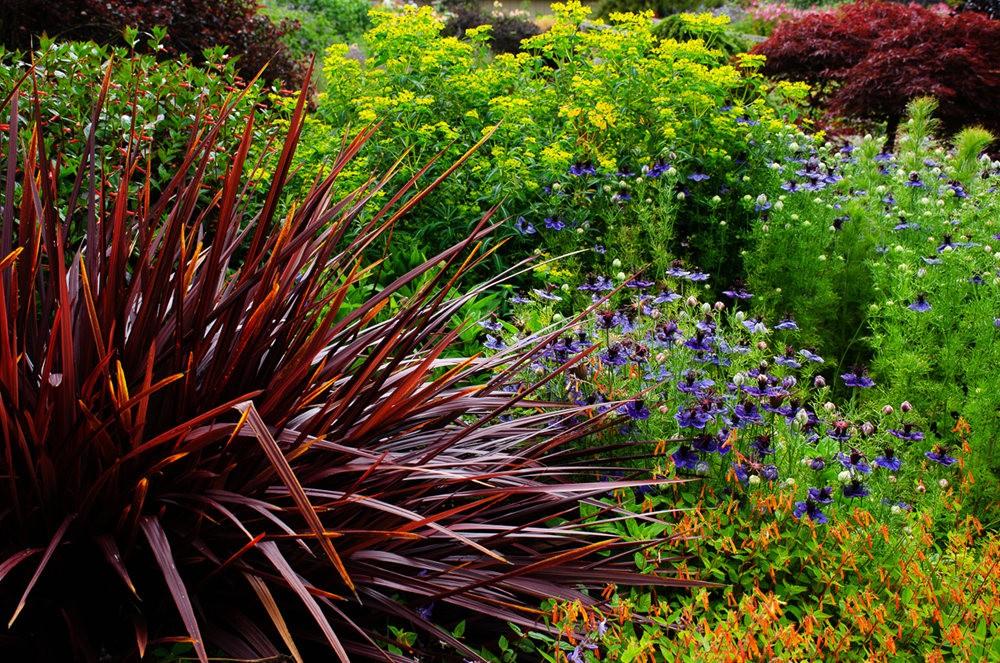 门多西诺海岸植物园重新开放_图1-17