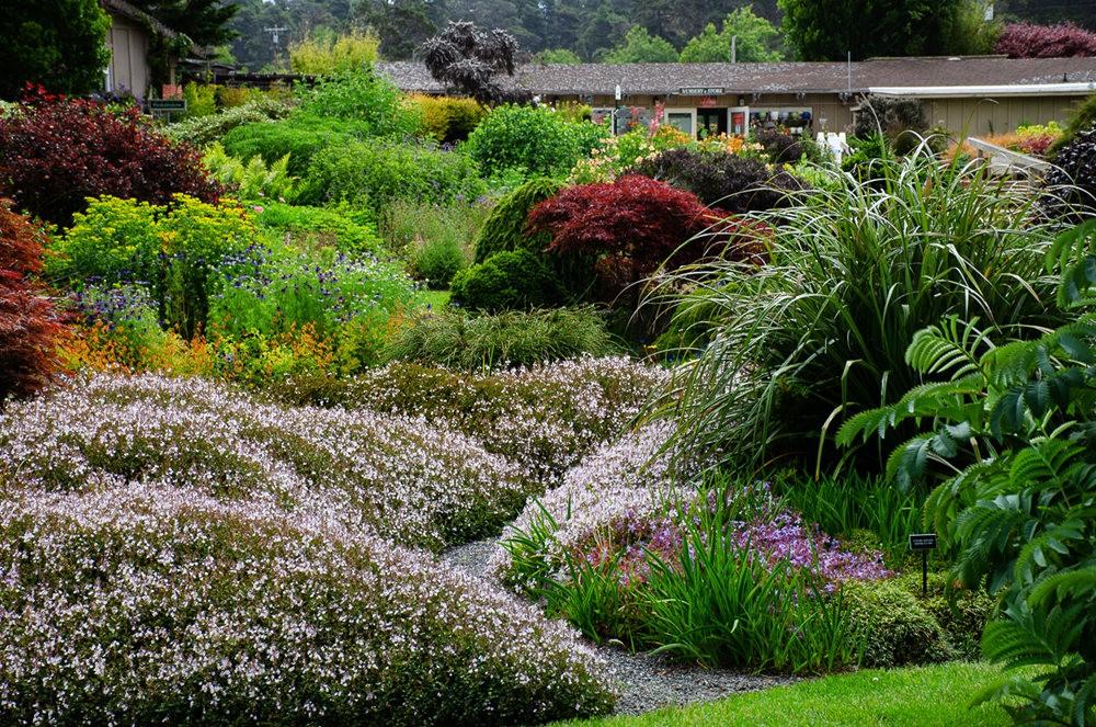 门多西诺海岸植物园重新开放_图1-19