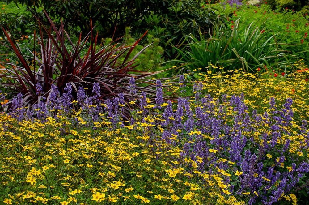 门多西诺海岸植物园重新开放_图1-20