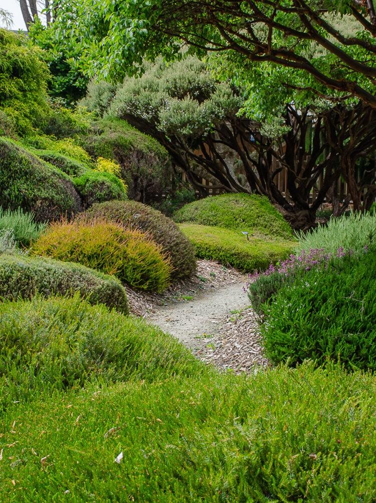 门多西诺海岸植物园重新开放_图1-22