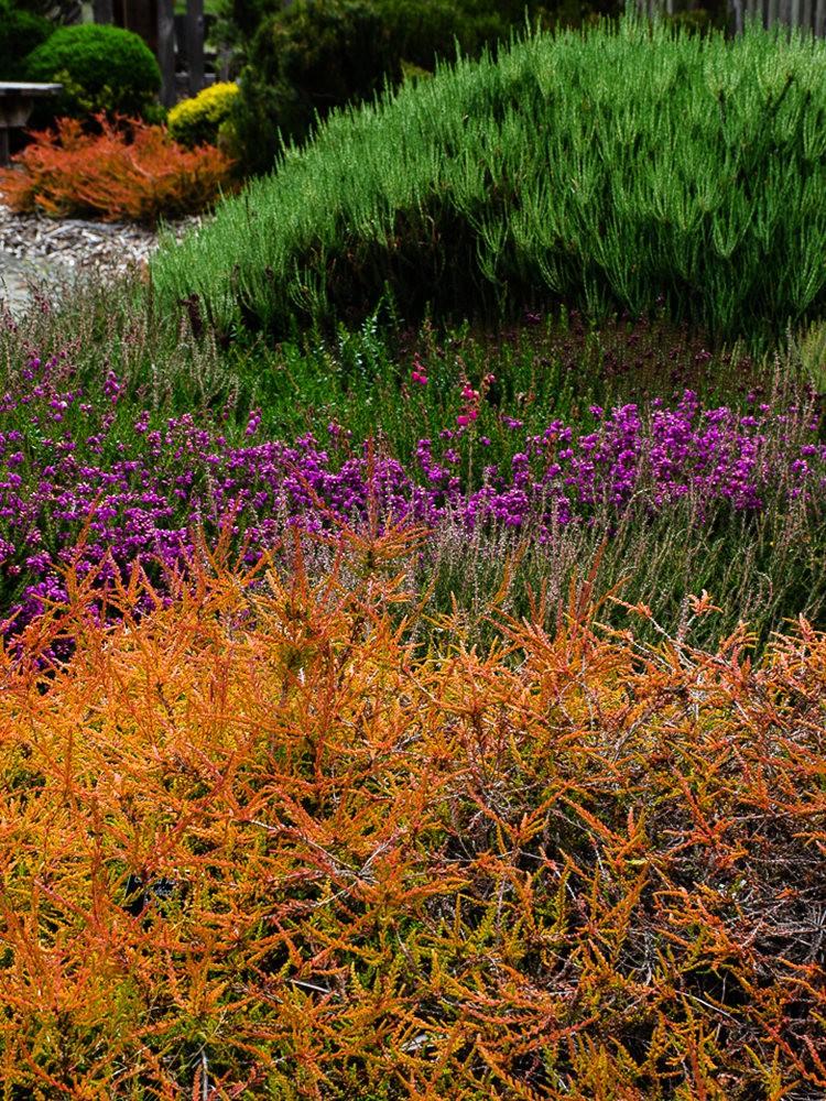 门多西诺海岸植物园重新开放_图1-23
