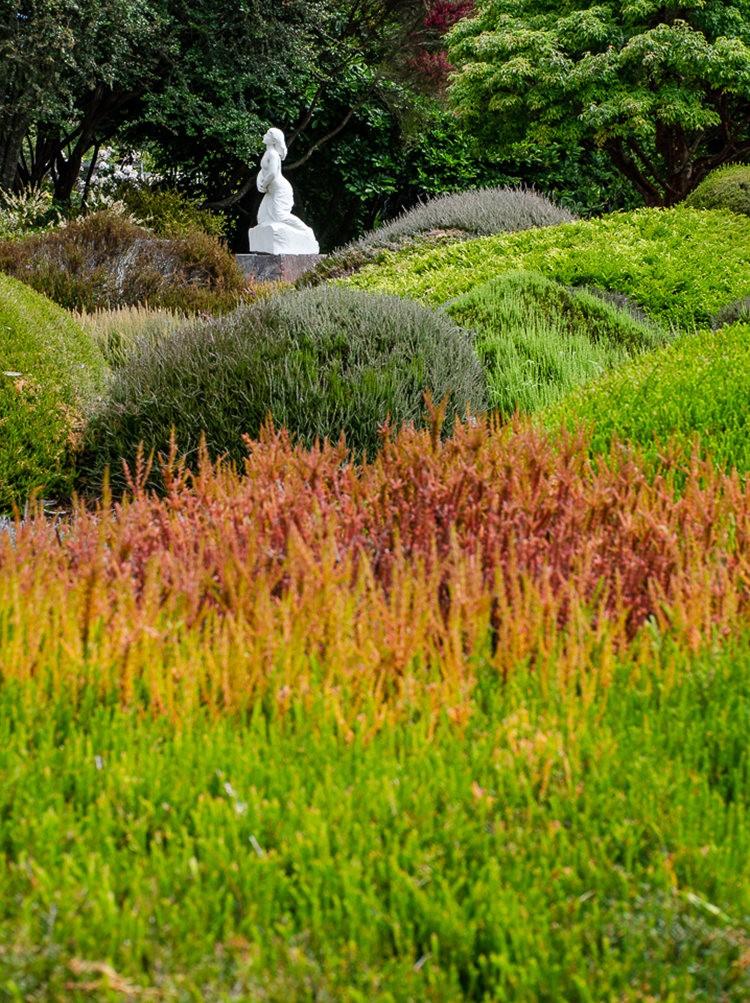 门多西诺海岸植物园重新开放_图1-24