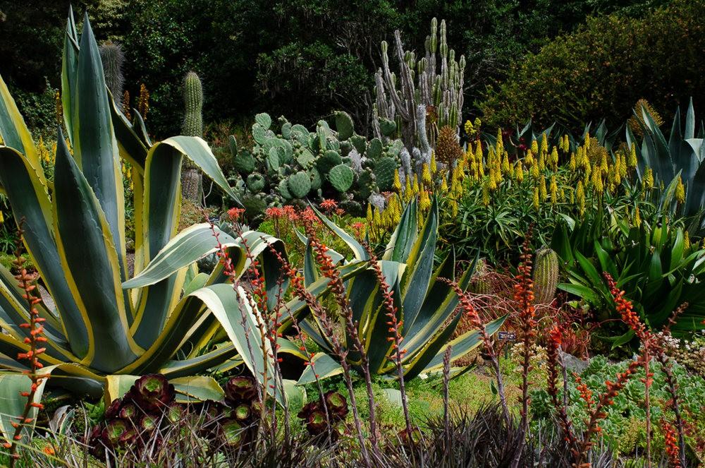 门多西诺海岸植物园重新开放_图1-25